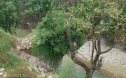 Γεφύρι Του Γκίνου